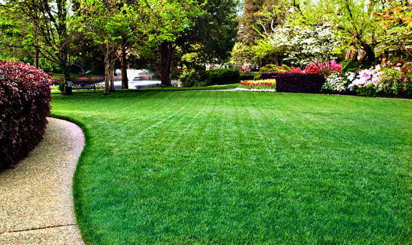 fertilizers  u0026 grass seeds for green lawns in columbus  indiana